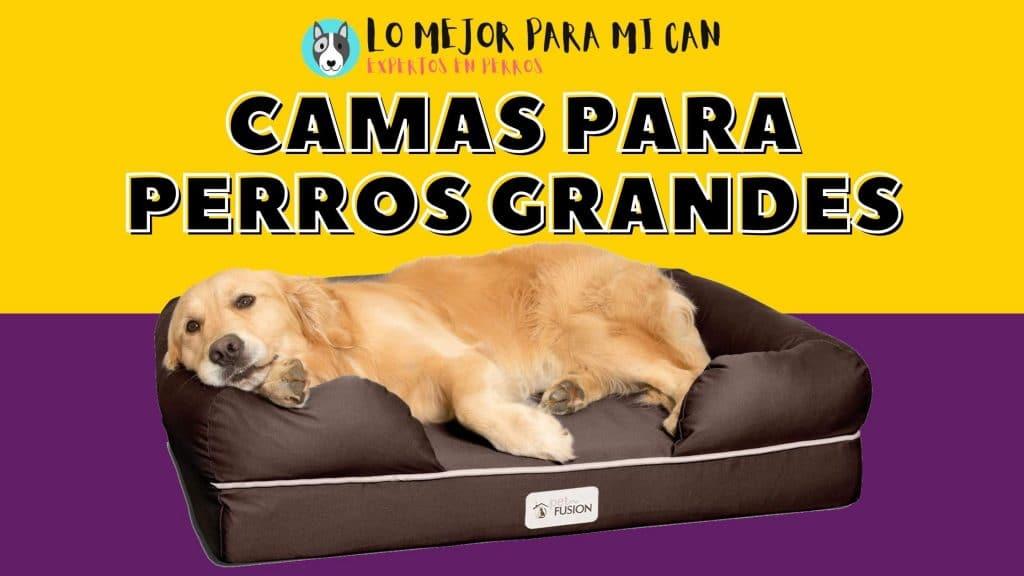 Las mejores camas para perros lavables, originales, impermeables y baratas